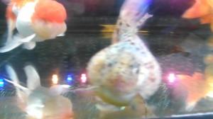 Uploaded image 2012-12-28 14.16.28.jpg