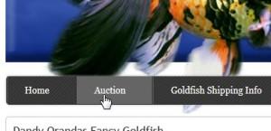 Live Goldfish Auctions