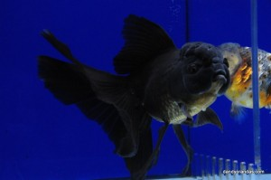 Uploaded image DSC_1811.JPG