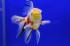 Uploaded image _DSC0079.jpg