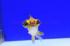 Uploaded image _DSC0607.jpg
