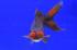 Uploaded image _DSC0632.jpg