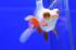 Uploaded image _DSC0640.jpg
