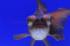 Uploaded image _DSC1101.jpg