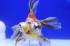 Uploaded image _DSC1483.jpg