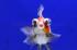 Uploaded image _DSC9545.jpg
