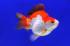 Uploaded image _DSC9971.jpg