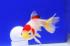 Uploaded image _DSC1772.jpg