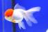 Uploaded image _DSC1868.jpg