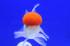Uploaded image _DSC1896.jpg