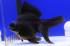 Uploaded image _DSC2036.jpg