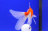 Uploaded image _DSC2085.jpg