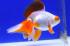 Uploaded image _DSC2108.jpg
