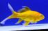 Uploaded image _DSC2203.jpg