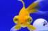 Uploaded image _DSC2225.jpg