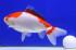 Uploaded image _DSC2340.jpg