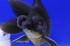 Uploaded image _DSC2760.jpg