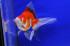 Uploaded image _DSC2771.jpg