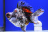 Uploaded image _DSC2805.jpg