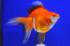 Uploaded image _DSC3071.jpg