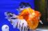 Uploaded image _DSC3168.jpg