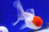 Uploaded image _DSC3483.jpg