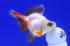 Uploaded image _DSC3673.jpg