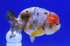 Uploaded image _DSC3713.jpg
