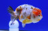 Uploaded image _DSC3714.jpg