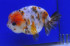 Uploaded image _DSC3715.jpg