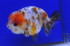 Uploaded image _DSC3716.jpg