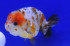 Uploaded image _DSC3717.jpg