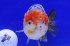 Uploaded image _DSC3718.jpg