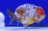 Uploaded image _DSC3720.jpg