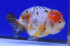 Uploaded image _DSC3721.jpg