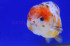 Uploaded image _DSC3723.jpg