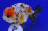 Uploaded image _DSC3725.jpg
