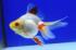 Uploaded image _DSC3740.jpg