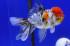 Uploaded image _DSC3811.jpg