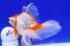 Uploaded image _DSC4049.jpg
