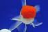 Uploaded image WD1_1366.jpg