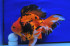 Uploaded image WD1_1567.jpg