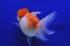 Uploaded image WD1_2663.jpg