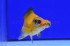 Uploaded image WD1_2798.jpg