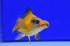 Uploaded image WD1_2799.jpg