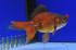 Uploaded image WD1_2925.jpg