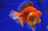 Uploaded image WD1_3110.jpg