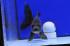 Uploaded image WD1_3125.jpg