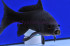 Uploaded image WD1_3128.jpg