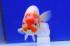 Uploaded image _DSC4510.jpg
